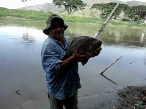 pesca en el cauca
