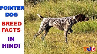 POINTER Dog Facts In HINDI : Popular Dogs : TUC : The Ultimate Channel