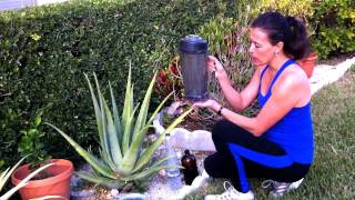 Recipe with Aloe Vera for Cancer Prevention