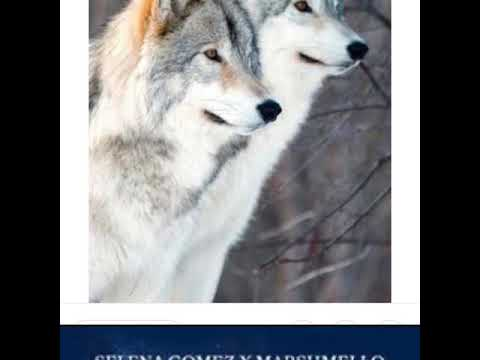 Selena Gomez - Wolves ( Hindi Version)