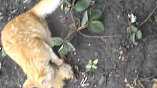 ужас!кот оторвал себе хвост!!!!