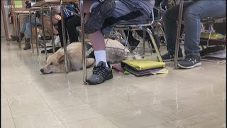 Erie Co. Sheriff Have New Therapy Dog
