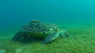 Экшн камера AEE S70 , море, черепахи