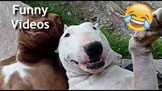 BEST ANIMALS FAILS | Funny Videos