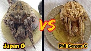 Download lagu Philippine Derby Spider Vs Japan Spider Spider Fight