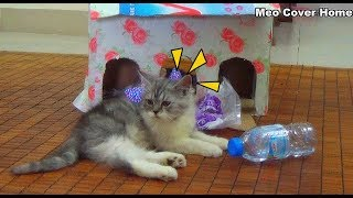 Two Kittens Play Around Home | Funny Cat And Kittens 2018 | Meo Cover Home