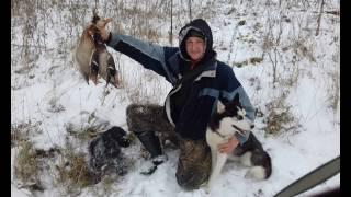 Охота с Русским охотничьим спаниелем по утке