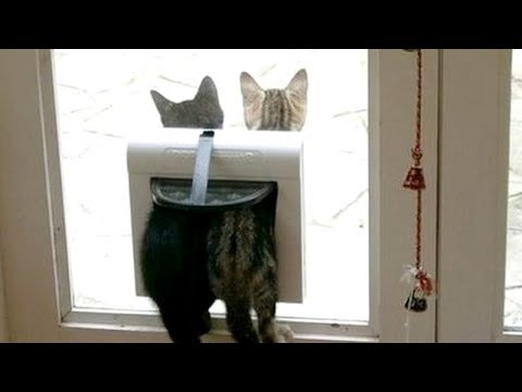 You WON'T CATCH YOUR BREATH from LAUGHING TOO HARD - Funny ANIMAL compilation