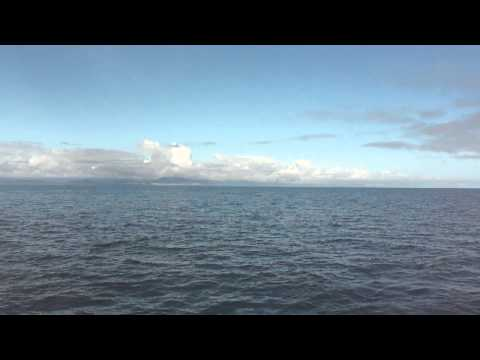 Two Humpback whales in the Lynn Canal