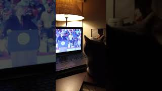 Cat watches video of President Trump.