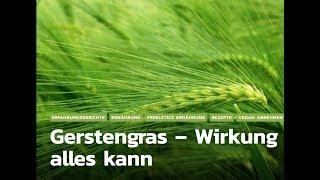 Gerstengras - Lebensmittel mit Superfood Wirkung