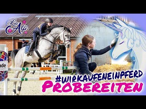 Lia & Alfi - Probereiten - Wir kaufen ein Pferd
