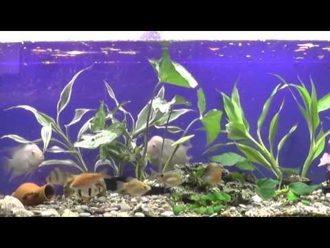 Мой аквариум 100 литров ДО и ПОСЛЕ