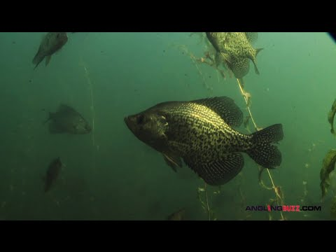 Top 3 Crappie Spawning Areas