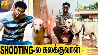 All About Dogs EPISODE – 2 | Labrador