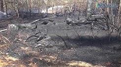 Flächenwaldbrand in Maxdorf