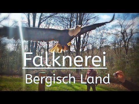 Falknerei // falconry // Bergisch Land // http://www.falknerei-bergischland.de/