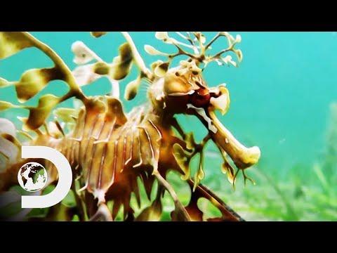 The Leafy Sea