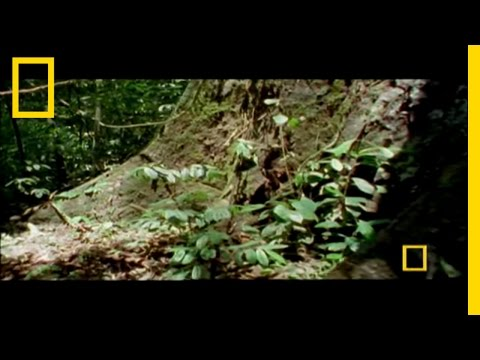 Mysteries of Borneo | National Geographic