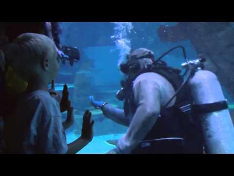Shark Reef Aquarium Mandalay Bay ,Las Vegas, Darcy Wersh