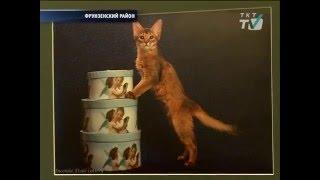 В библиотеке № 6 им. Короленко поселились сомалийские коты и кошки