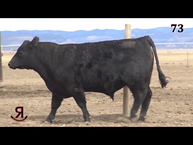 Reverse Rocking R Ranch Lot 73