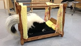Summers Woodworking Creative 2x4 Competition 2014 Entry   Pet Bed