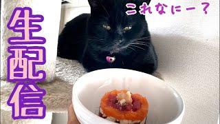 【生配信8/1】ナナうちの子2年記念のケーキをあげます生配信🐈⬛🎂