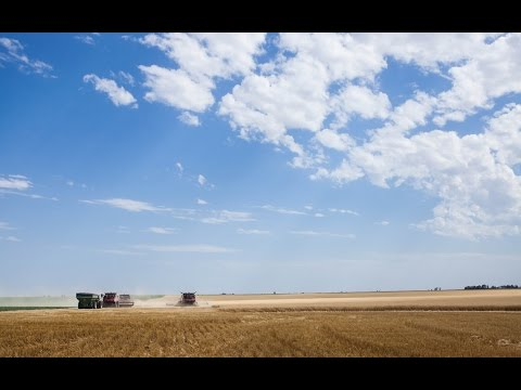 WHEAT HARVEST 2016 | NEBRASKA | FARM LIFE
