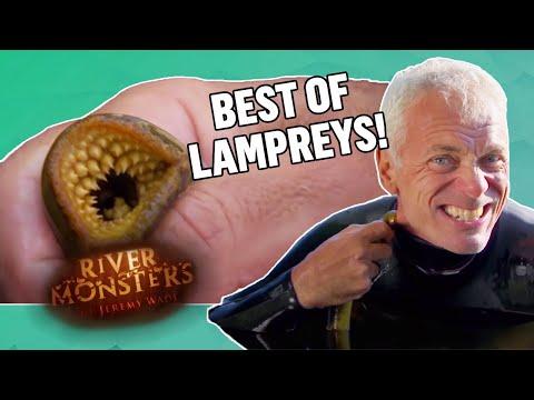 Best Of Lampreys - River Monsters