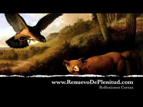 El Aguila Del Ala Cortada Reflexiones En Video Youtube