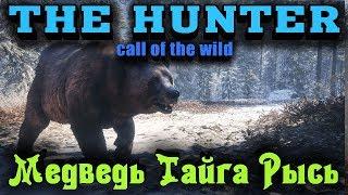 Медведь Рысь Тайга Зима - TheHunter Call of The Wild