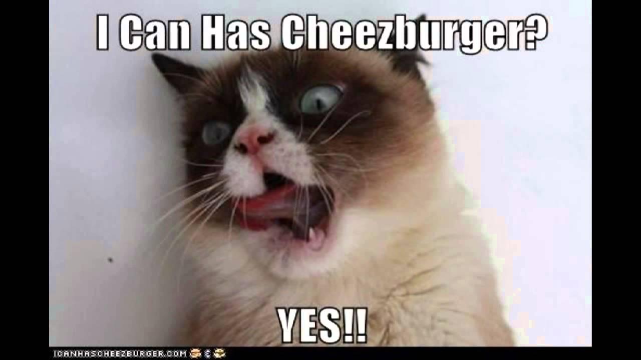 Take This Cat Memes