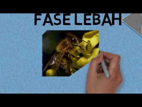 44 Koleksi Gambar Siklus Hidup Hewan Lebah Gratis Terbaik