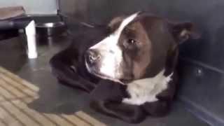 Sue's Journey - Coastal German Shepherd Rescue Oc