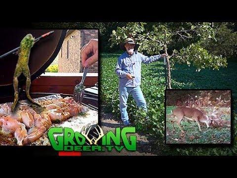 Deer Hunters: Create Mock Scrapes | New Food Plots | Cooking Frog Legs (#401) @GrrowingDeer.tv