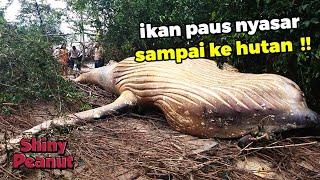 Gambar cover Inilah Penemuan-penemuan Paling Janggal dan Aneh yang Ada di Hutan