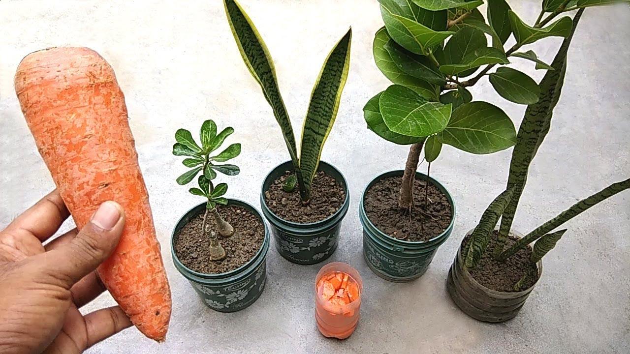 Best Natural Fertilizer For All Plants Homemade Liquid Fertilizer For Plants Youtube