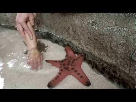 Kids touching starfish & Horseshoe crab at River Safari of Singapore Zoo