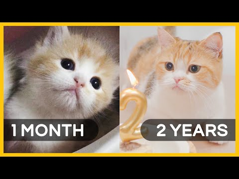 Kitten to Mother Cat | 1 month to 2 years in 5 mins | Happy Birthday to Belly