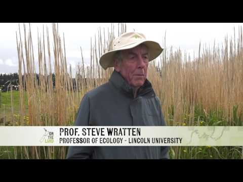 Education: Grass shelter belts a haven for good insects