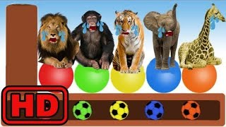 Kid -Kids -Learn Color ZOO Animals And Balls- Learning Animals video For Children/ZOO Animals Learn