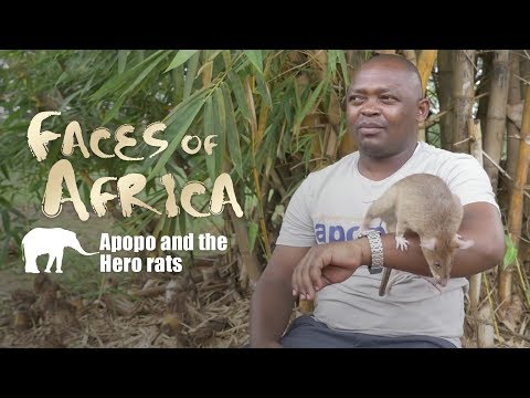 Faces Of Africa - Fidelis, APOPO And The Hero Rats