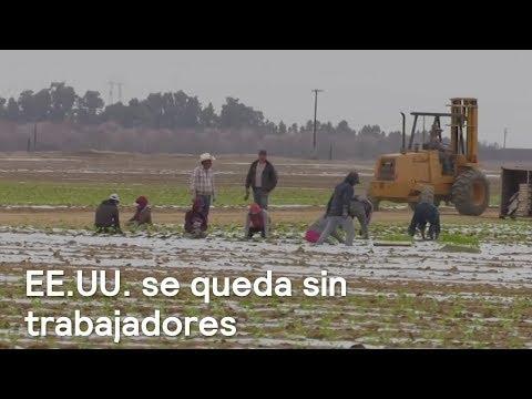 Disminuye mano de obra migrante en campos de California - En Punto con Denise Maerker