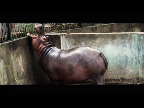 Yangon Zoological Gardens HD 2017