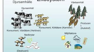 Biologi, Ekologi
