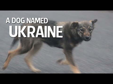 A Dog Named Ukraine - EP. #0