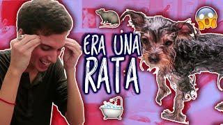 BAÑANDO A CHESTER - Al final era un rata! (Capitulo 11)