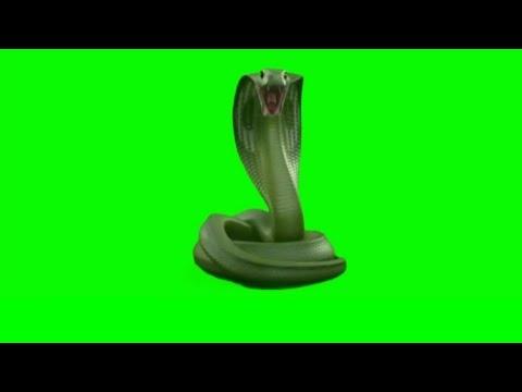 🐍 Snake King Cobra Green Screen Vfx Editing Animation Video | Snake Green  Screen Animation Video