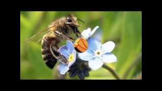 pszczłka maja sobie lata i piękne kwiaty dla dzieci i dorosłych